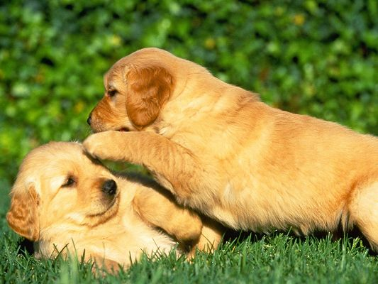 click to free download the wallpaper--Caring Puppy HD Post in Pixel of 1600x1200, Closer and Closer to Each Other, I Want to Whisper to You a Long Story - Cute Animals Wallpaper