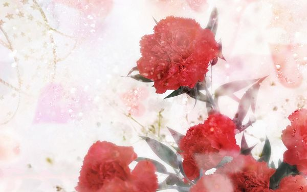 click to free download the wallpaper--Carnation Flower Photo, Red and Sweet Flower for the Dearest Mom