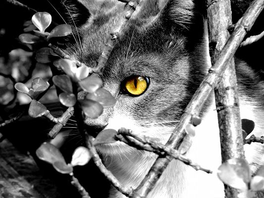 click to free download the wallpaper--Chartreux Cat Image, Hiding Behind the Branch, It is Hard to Find