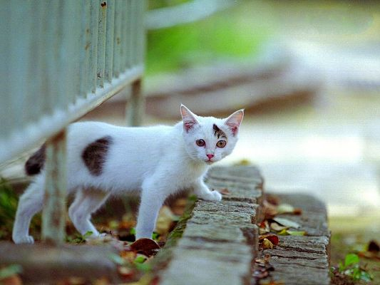 click to free download the wallpaper--City Cat Images, White Kitten Walking on Stairs, Turning Around to Look at You