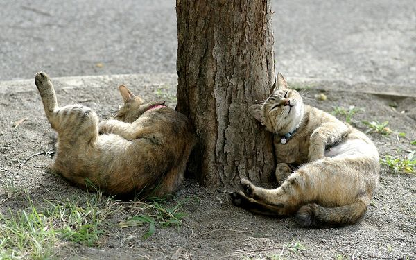click to free download the wallpaper--City Cat Pic, Leaning on a Tree, They Are Homeless, Will be Company to Each Other