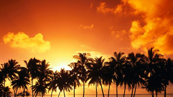 Coconut Trees in Prosperous Growth, Responding to the Setting Sun, Sky is Painted Bright and Golden, Comfortable Life - HD Natural Scenery Wallpaper