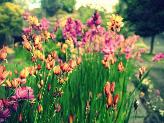 click to free download the wallpaper--Colorful Flower Pictures, Bunch of Flowers Among Green Grass, Beautiful and Impressive Scene