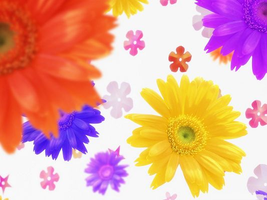 click to free download the wallpaper--Colorful Flowers Picture, Beautiful Flowers in Bloom, White Background
