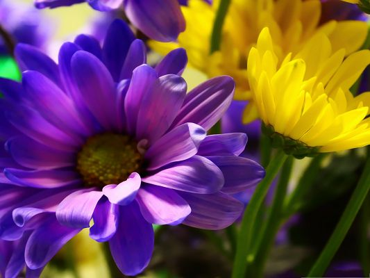 click to free download the wallpaper--Colorful Flowers Picture, Blooming Flowers in Yellow and Purple, Amazing Scenery
