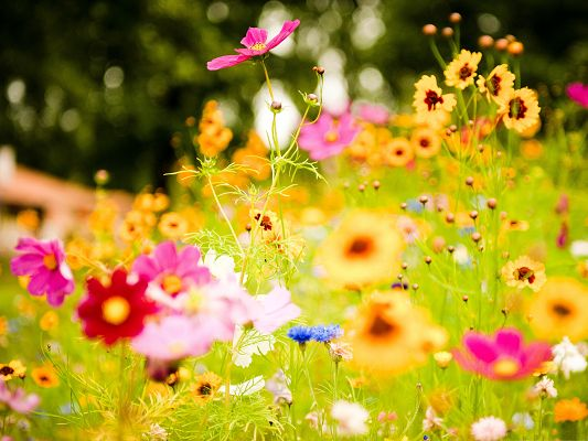 click to free download the wallpaper--Colorful Flowers Picture, Tiny Flowers in Bloom, Green Grass Around