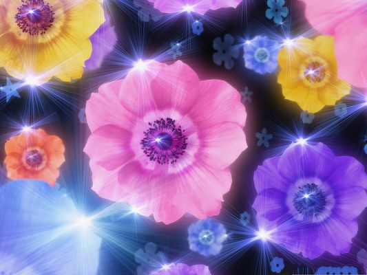 click to free download the wallpaper--Colorful Flowers Picture, Various Flowers in Bloom, Added Glowing Effect