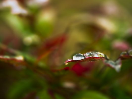 click to free download the wallpaper--Computer Background Wallpaper, Beautiful Bokeh, Clear Waterdrops on Leaf