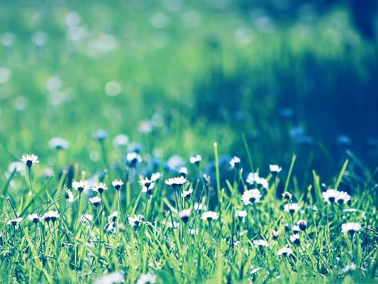 click to free download the wallpaper--Computer Background Wallpaper, Daisies Field, Green and Impressive Landscape