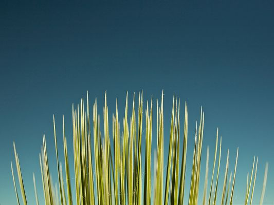 click to free download the wallpaper--Computer Background Wallpaper, Palm Leaf Under the Blue Sky, Great Growth