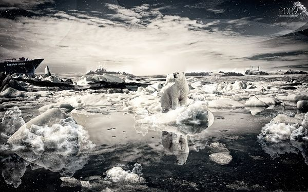 click to free download the wallpaper--Computer Background Wallpaper, Polar Bear On Melting Ice, Dangerous Condition