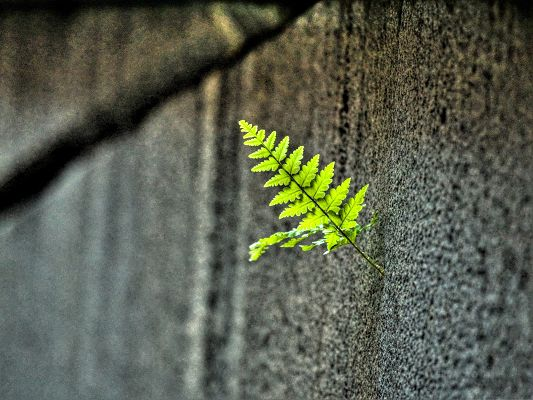 click to free download the wallpaper--Computer Background Wallpaper, Small Fern in Tough Living Condition