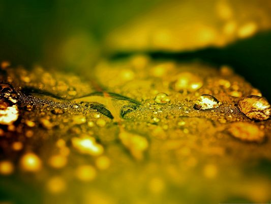 click to free download the wallpaper--Computer Background Wallpaper, Wet Leaf Bokeh, Golden Look