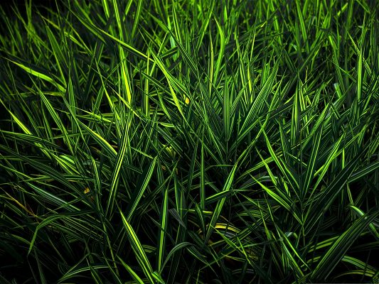 click to free download the wallpaper--Computer Background Wallpaper, a Full Eye of Green Grass, Incredible Look