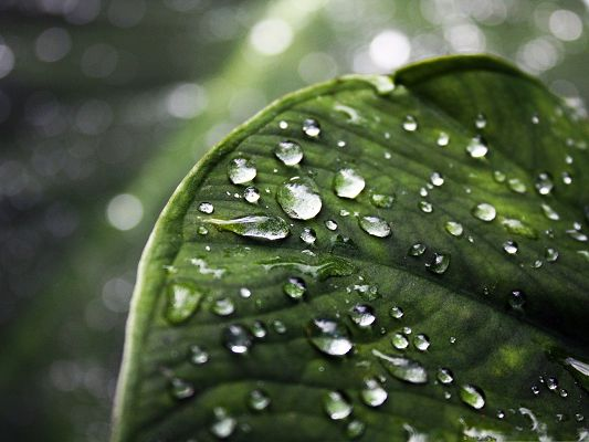 click to free download the wallpaper--Computer Wallpapers Free, Clear Raindrops on Green Leaf, Greatly Impressive