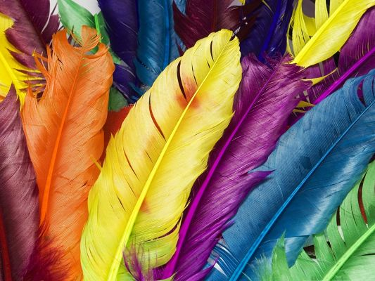 click to free download the wallpaper--Computer Wallpapers Free, Colorful Feathers Piled Up, Shall Look Good on Various Devices