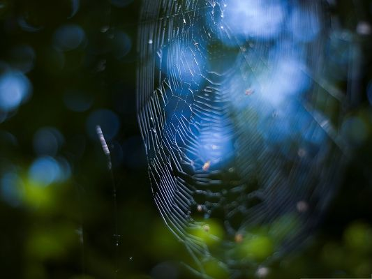 click to free download the wallpaper--Computer Wallpapers Free, Spider Web Bokeh, Shinning Under the Blue Sky