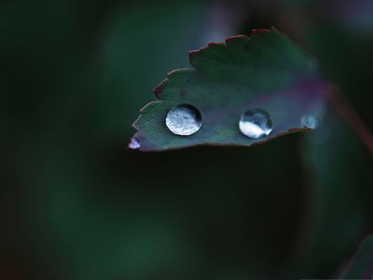 click to free download the wallpaper--Computer Wallpapers Free, Water Drops on Leaf, Crystal Clear and Impressive