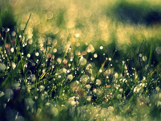 click to free download the wallpaper--Computer Wallpapers HD, Grass Dew Close Up, Nice Light Bokeh