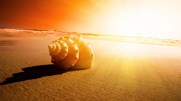 Conch by the Seaside, Sun is Producing Golden Glow, Things Are Peaceful, Good and Fine - Photography HD Wallpaper