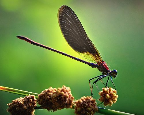 click to free download the wallpaper--Cute Animal Images, Dragonfly Macro, Green Background, Good-Looking and Impressive