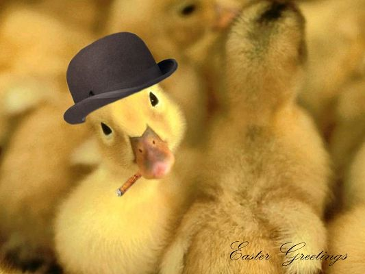 Cute Animal Images, Ducky Greetings for the Easter Day, in Cool Black Hat