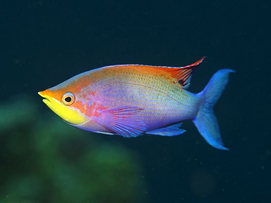 click to free download the wallpaper--Cute Animal Posts, the Underwater World, a Colorful Fish, Shall Grab Much Attention