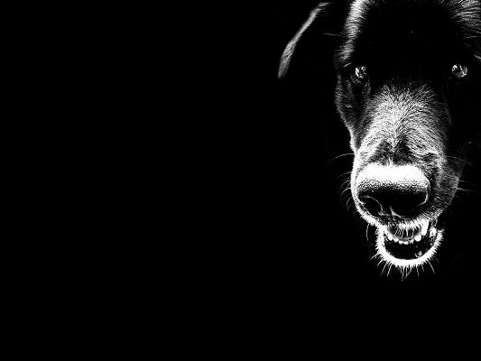 click to free download the wallpaper--Cute Animals Image, Dog in Black Tones, Shinning Eyes, It Shall Strike a Deep Impression