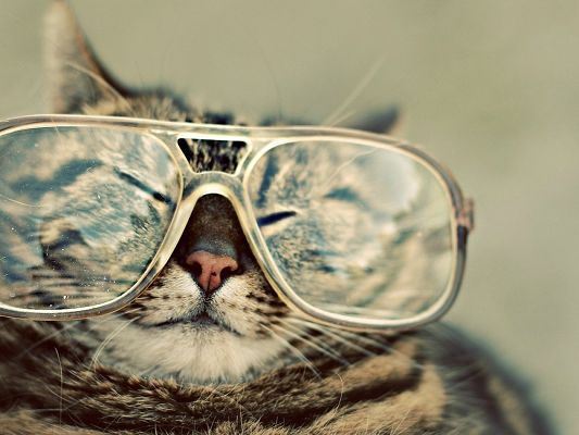 click to free download the wallpaper--Cute Animals Image, Funny Cat with Large Glasses, Can't Open the Eyes, Is the Glass Heavy?