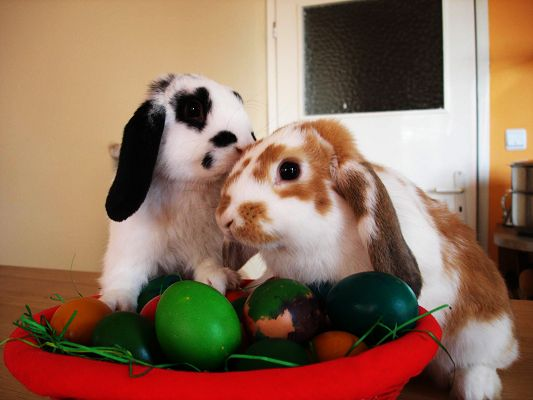 click to free download the wallpaper--Cute Animals Image, Rabbits and Eggs, Is Easter Day Around the Corner?