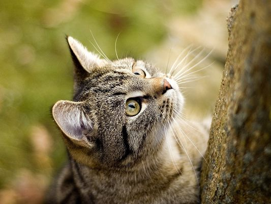 click to free download the wallpaper--Cute Animals Image, an Attentive Kitten by a Tree, Ready to Climb and Hunt