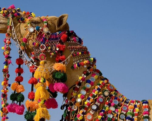 Cute Animals Image, the Hard-Working Camel, Colorful and Precious Accessories All Over the Body