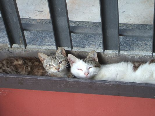 click to free download the wallpaper--Cute Animals Images, Two Cats Sleeping Outdoor, Just Weakening Up