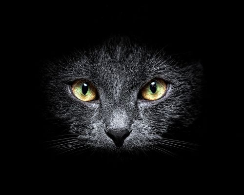 click to free download the wallpaper--Cute Animals Pic, Black Cat in the Dark, Attentive Eyesight, Shall Fit Various Devices