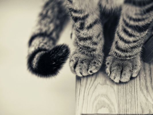 click to free download the wallpaper--Cute Animals Pic, Cat Paws, Soft and Nice-Looking, a Black and Gray Tale