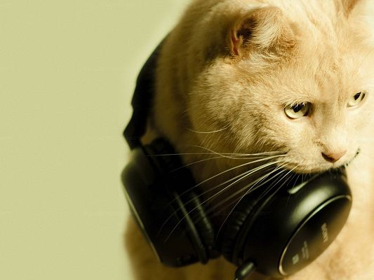 click to free download the wallpaper--Cute Animals Pic, Cat in Earphone, Can't Take It Off, Amazing Melody