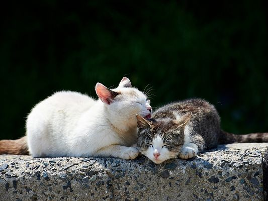click to free download the wallpaper--Cute Animals Pic, Cats Sleeping, Close to Each Other, Great Lovers