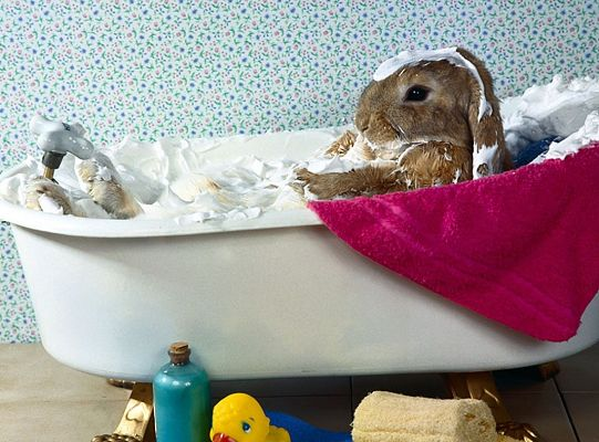 click to free download the wallpaper--Cute Animals Pic, Easter Bunny in Bath, Foams All Around It, Bath is Comfortable