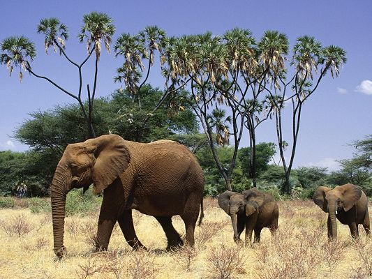 click to free download the wallpaper--Cute Animals Pic, Elephants and Cubs, Following You, We Are Always Safe