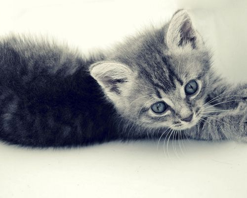click to free download the wallpaper--Cute Animals Pic, Little Kitten Stretching, I Will be Long Tomorrow