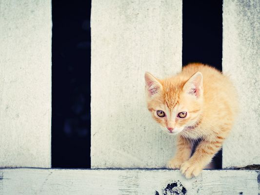 click to free download the wallpaper--Cute Animals Pic, Orange Kitten, Wet Shinning Eyes, Shall be Impressive