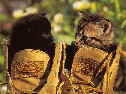 click to free download the wallpaper--Cute Animals Pic, Two Cats in the Shoes, Looking Each Other in the Eyes