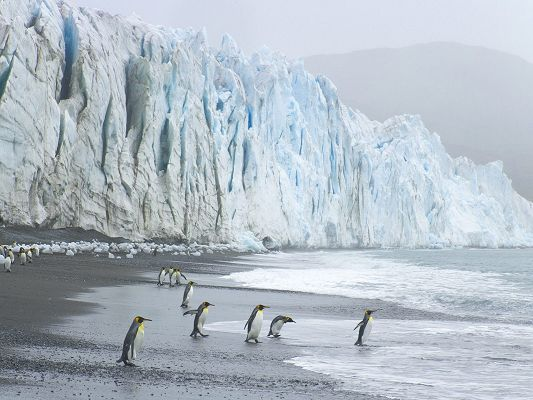 Cute Animals Pic, a Group of Penguins, Ready to Jump into the Sea