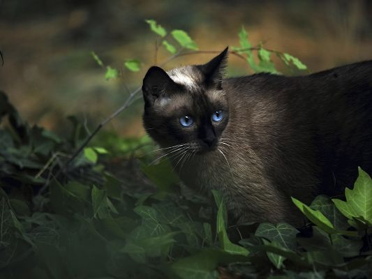 click to free download the wallpaper--Cute Animals Post, Kitty in Blue Eyesight, Black Fur, Walking Alone in the Forest