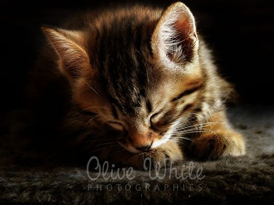 click to free download the wallpaper--Cute Animals Post, a Little Kitty Falling Asleep, the Carpet Fits It