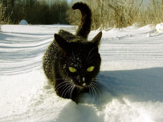 Cute Animals Poster, Black Cat in the Snow, Having a Great Time