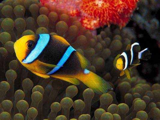 click to free download the wallpaper--Cute Animals Poster, Two Fishes in Free Swim, Sea Weeds in Great Growth, Amazing World