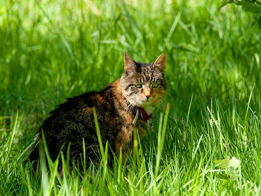 click to free download the wallpaper--Cute Cat Image, Kitten Standing Among Green Grass, Depressed Eyes