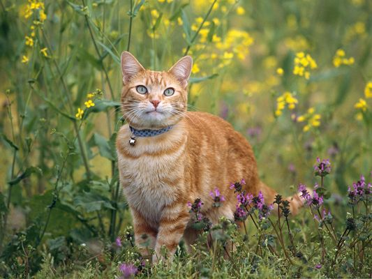 Cute Cat Image, Kitten Staying Outdoor, Great Nature Landscape Around