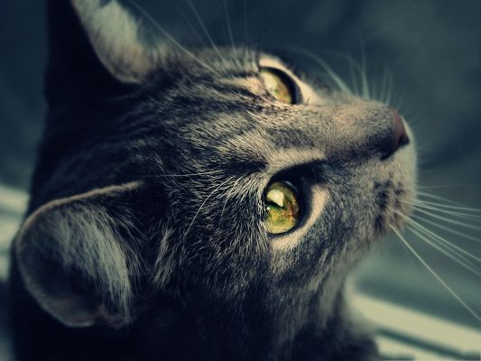 click to free download the wallpaper--Cute Cat Images, Cat Making a Wish, Clear Shinning Eyes